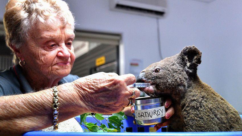 AUSTRALIA KOALA ANIMAL FIRE